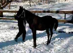 harmony_snow_hind_end_over